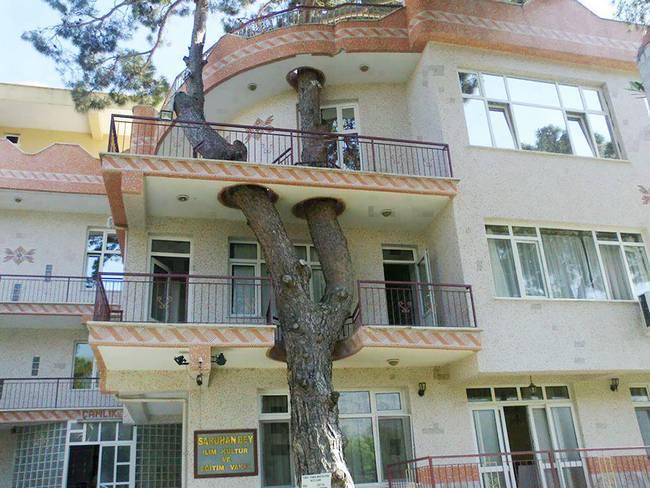 construções-que-os-arquitetos-não-arrancaram-as-árvores-2