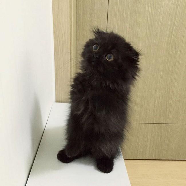 gimmo-gato-8