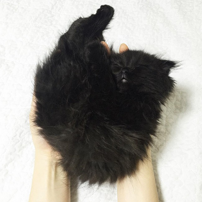 gimmo-gato-9
