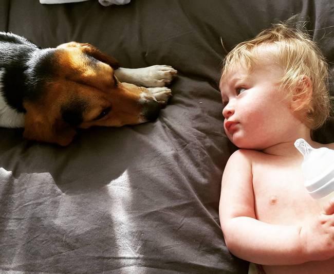 cachorro-crianca-5