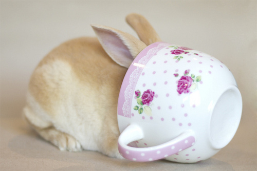 Image result for tea with the bunny