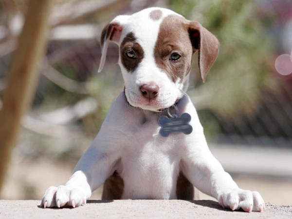 A blog filled with adorable puppies!