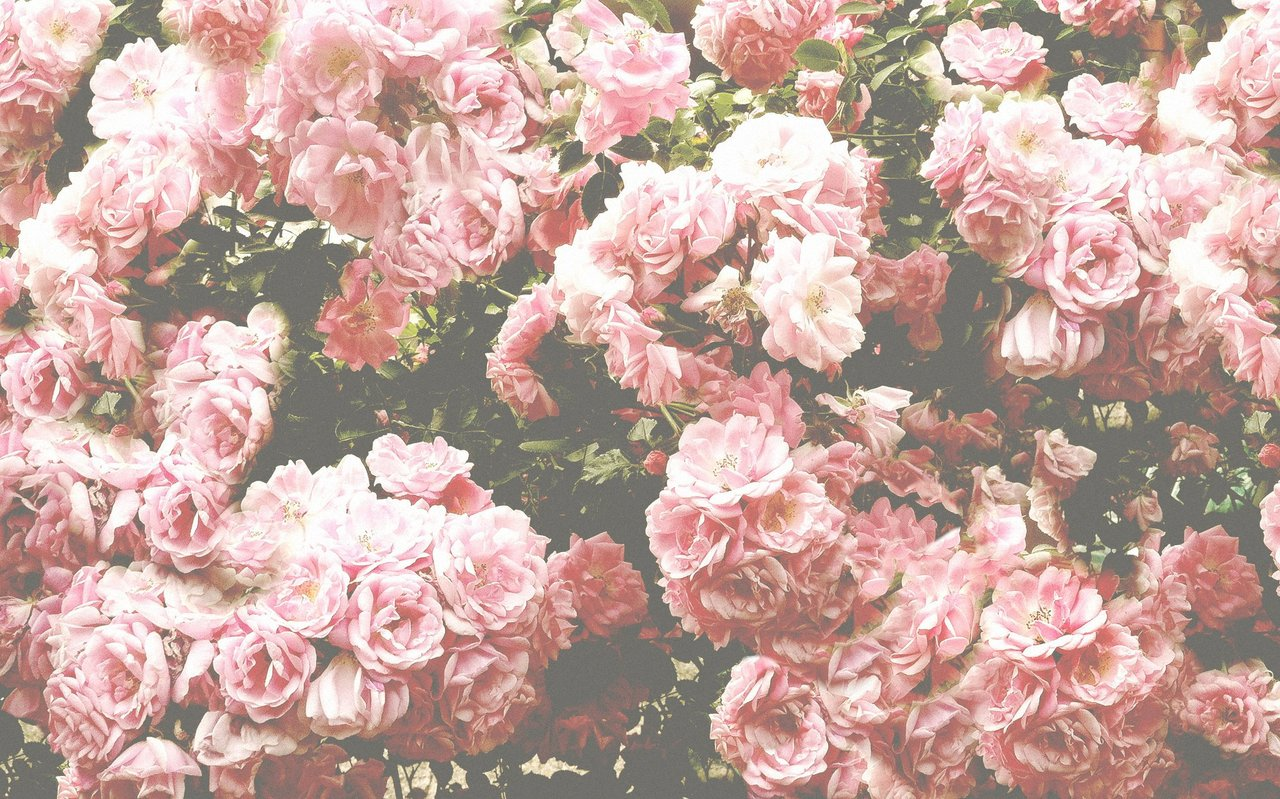 Amazing Hoontoidly Roses Tumblr Background Quotes Images