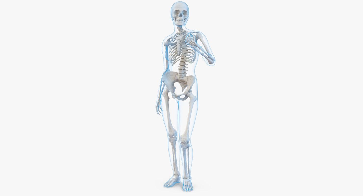 3d Female Body Skeleton Standing