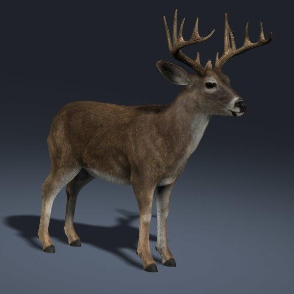 Whitetail Deer Fur