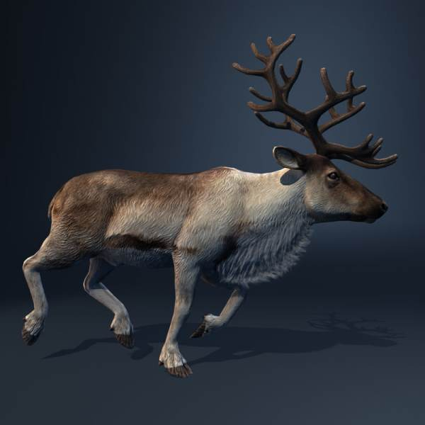 3d Model Reindeer Deer Animation Walk
