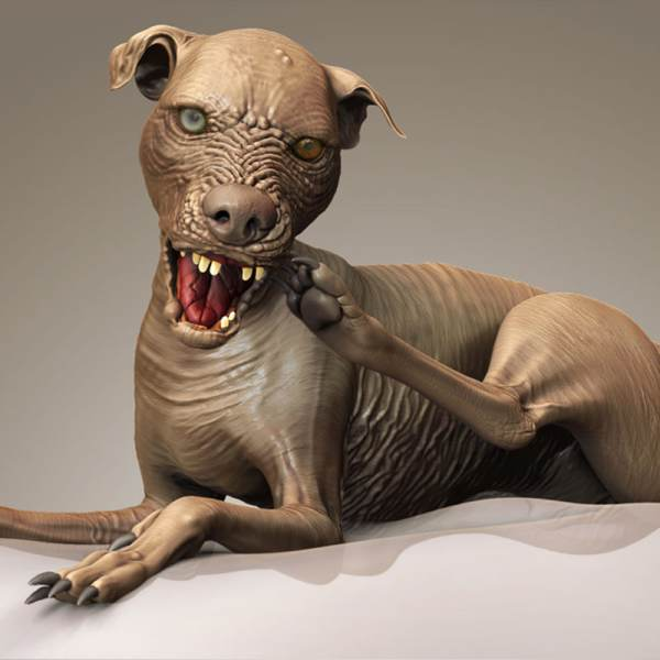 Baby In The World Ugliest Dog - Year of Clean Water