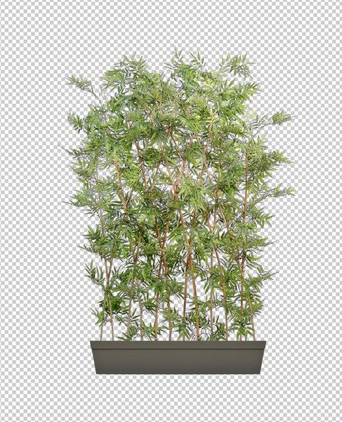 Stock Other bamboo pot Bush