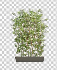 Stock Other bamboo pot Bush