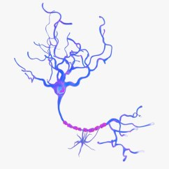 Complete Neuron Cell Diagram 30 Amp Rv Wiring 3d Model