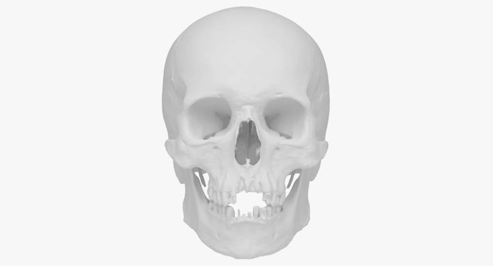 medium resolution of real human skull scan 3d model
