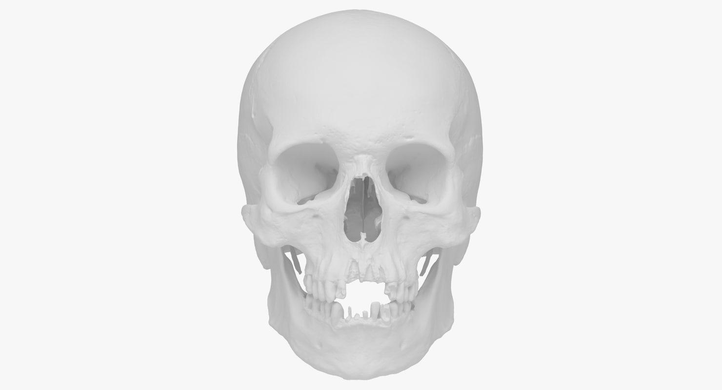 hight resolution of real human skull scan 3d model