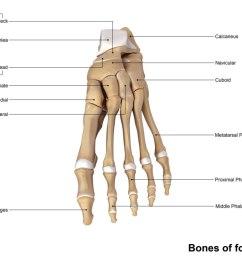 human foot bone diagram [ 1210 x 756 Pixel ]