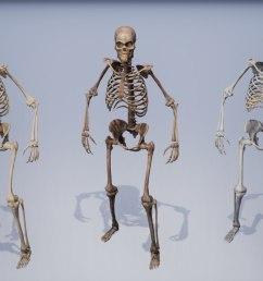 human remains skeleton body model [ 1422 x 800 Pixel ]