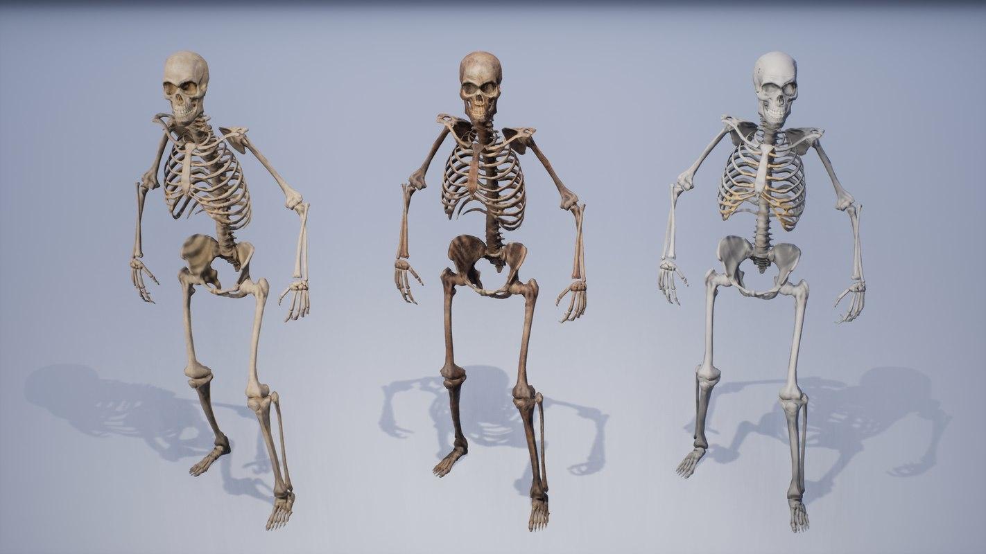 hight resolution of human remains skeleton body model