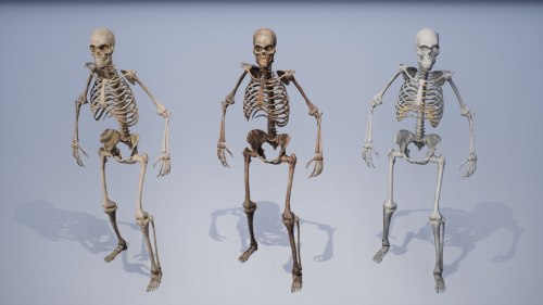 small resolution of human remains skeleton body model