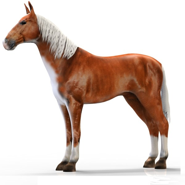 realistic horse games # 5