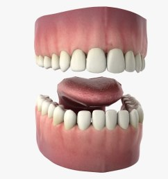 3d rigged human mouth teeth model [ 1480 x 800 Pixel ]