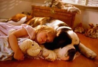 Cute Puppies Sleeping Wallpaper Big Friendly Dog Tv Tropes