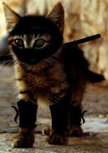 Cute Little Cat For Wallpaper Cats Are Ninjas Ykttw Discussion Tv Tropes