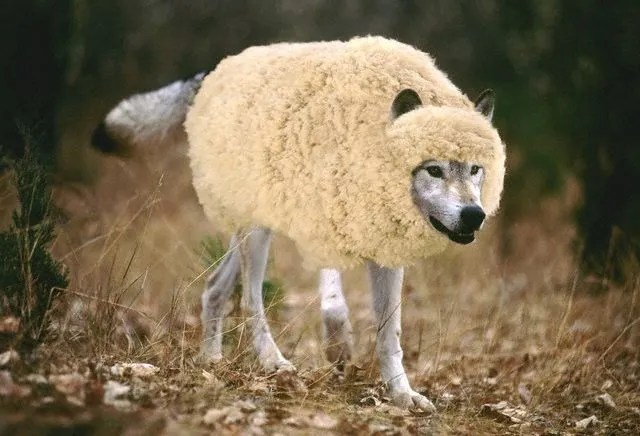 Image result for wolf sheep's clothing