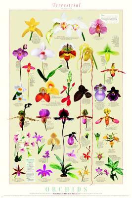 jekylla_orchids