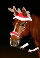 rudolph_reindeer