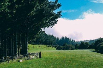 Reiseziele 2017 Neuseeland 6