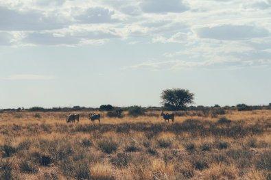 Kalahari (6 von 15)