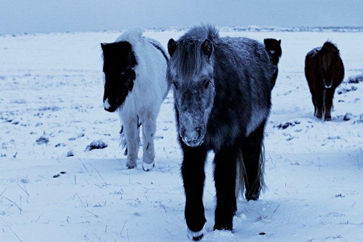 Pferde1-Exposure