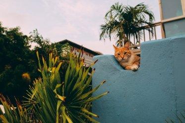 uber-Places: Scuba Lodge Boutique Hotel Curacao