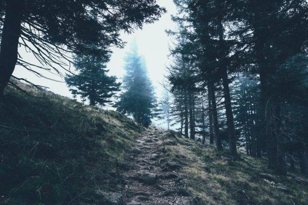 Feldberg im Nebel