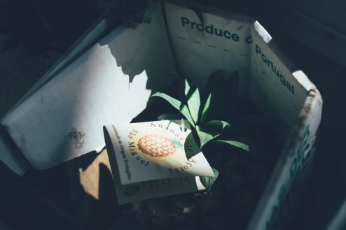 Ananas Azoren