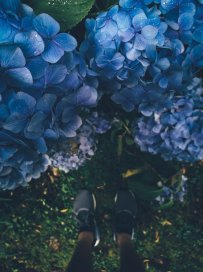Makro Fotografie mit em Huawei P9