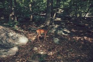 USA, Appalachian Trail, Reh