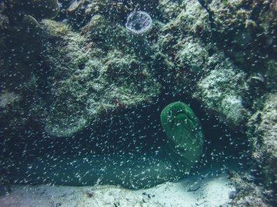Eine Muräne schaut was sich vor ihre Höhle rumtreibt