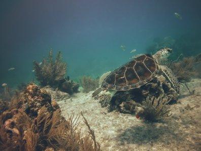 Begegnungen mit Schildkröten sind hier keine Seltenheit