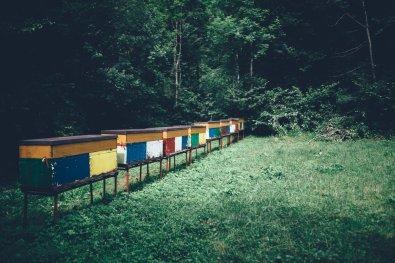 Bienenstöcke auf dem Weg zum Weg zum Slap Kozjak