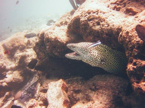 Diving Maldives Fish Factory