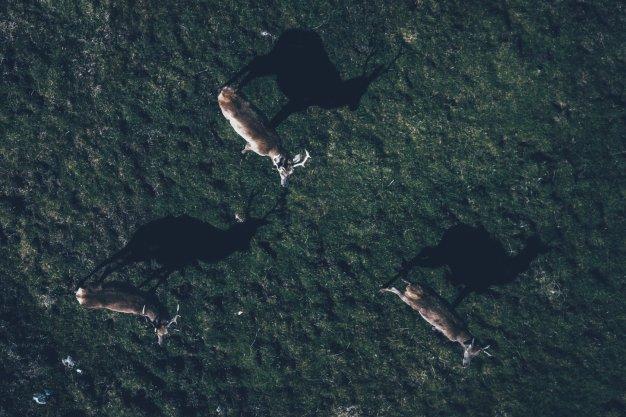 Wunderschön, die Tierwelt auf und um Jura