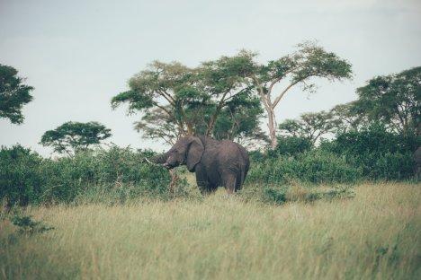 Wildlife in Uganda