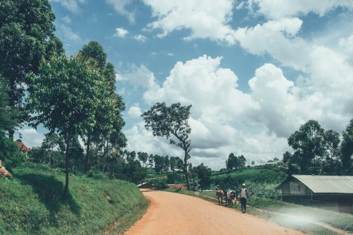Grüne Landschaften Ugandas