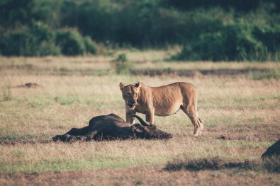 Wildlife im Queen-Elizabeth-Nationalpark