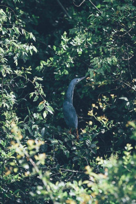Wildlife im Mburo Nationalpark