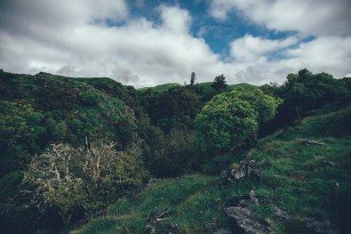 Die grünen Hügeln von Waitomo
