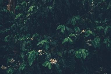 05_Costa_Rica_0063