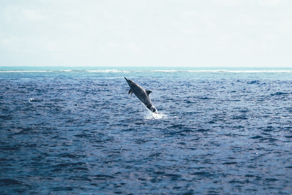 Dolphin Watch Tour
