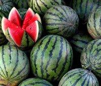 Херсонский арбуз вскоре станет брендовым продуктом