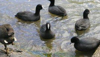 На Херсонщині спалили 9 тисяч тушок птахів, які загинули в Чорному морі