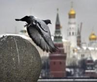 """""""I love Russia"""" вместо """"Russia, goodbye!""""... на пятом году войны"""
